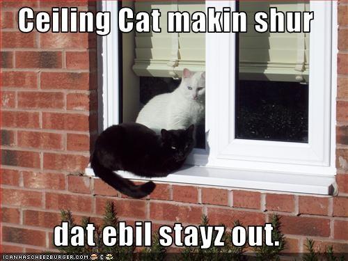 basement cat ceiling cat evil helping - 3348402432