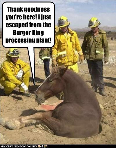 animals fast food horse stuck wtf