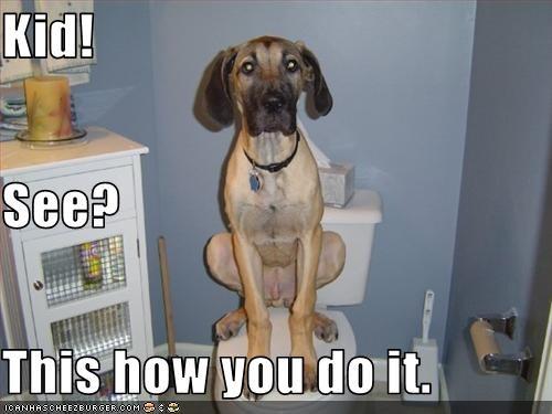 example mixed breed toilet - 3350240512
