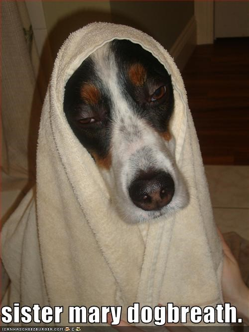 nun,whatbreed
