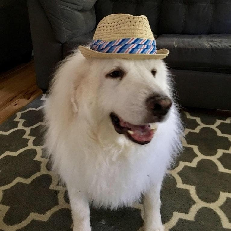 a funny list of an all new dogs wearing goofy hats