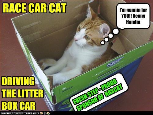 RACE CAR CAT DRIVING THE LITTER BOX CAR I'm gunnin for YOU!! Denny Hamlin FRESH STEP - PROUD SPONSOR OF NASCAT