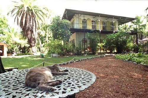 54 cats of Ernest Hemingway survived Hurricane