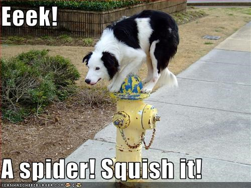 border collie,fire hydrant,Hall of Fame,mixed breed,scared,spider,squish
