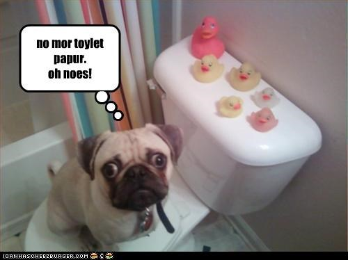 no mor toylet papur. oh noes!