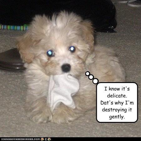destroy gentle puppy terrier mix - 3352146944