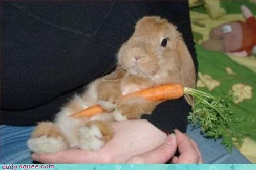 bunny carrot easter - 3352874496