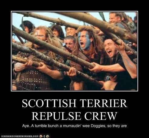 SCOTTISH TERRIER REPULSE CREW Aye..A turrible bunch a murraudin' wee Doggies, so they are
