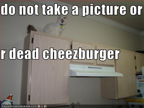Cheezburger Image 3353848576