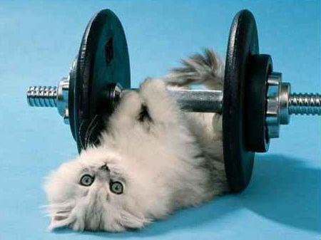 the 10 most active cat breeds
