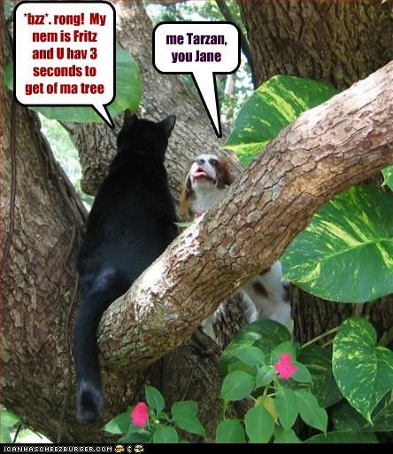 me Tarzan, you Jane *bzz*. rong! My nem is Fritz and U hav 3 seconds to get of ma tree