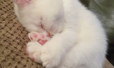 a cute list of cats and kittens and their toes