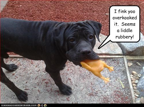 bullmastiff,chew,duck,puppy,rubber,toy