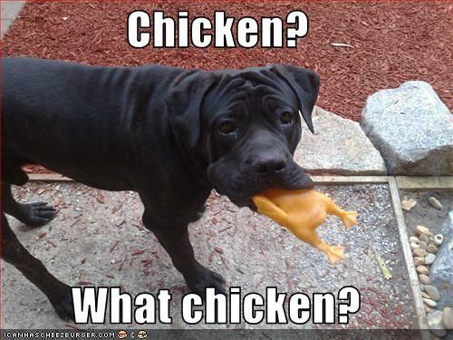 Cheezburger Image 3356338432