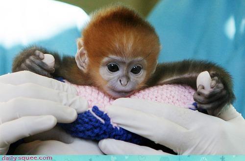 baby monkey nerd jokes - 3356983040