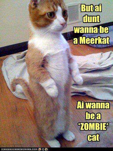 do not want meerkat zombie apocalypse