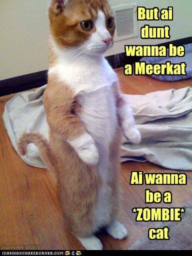 do not want meerkat zombie apocalypse - 3357105408
