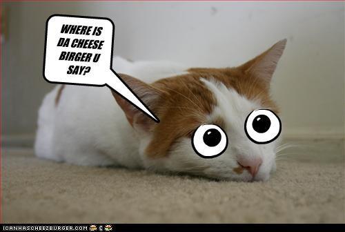 Cheezburger Image 3357527552