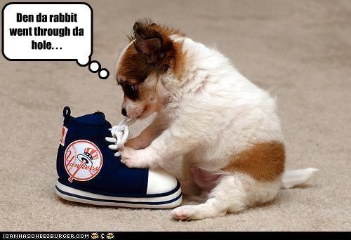 jack russel terrier shoes - 3358184704