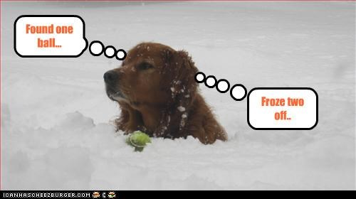 cold,golden retriever,Hall of Fame,snow,tennis ball