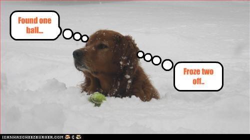 cold golden retriever Hall of Fame snow tennis ball - 3359115264