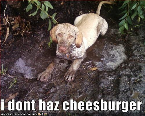 Cheezburger Image 3359551744