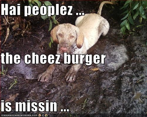 Cheezburger Image 3360513280