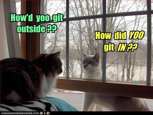 confused inside outside window - 3360686336