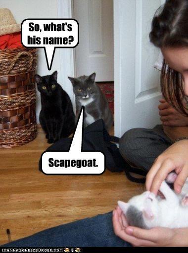 cute do not want kitten scape goat - 3361171200