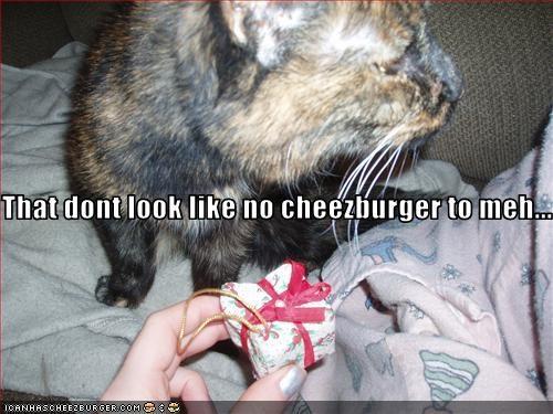 Cheezburger Image 3362038528