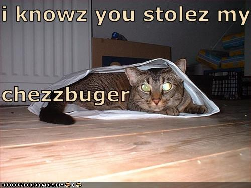 Cheezburger Image 3362741248