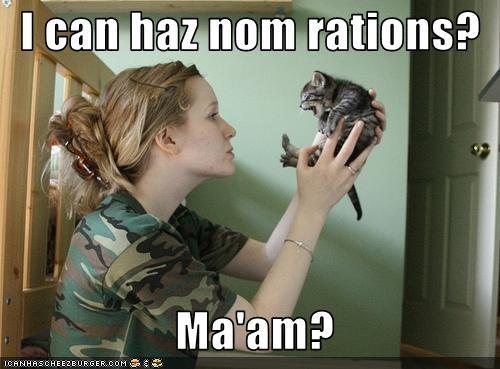 army cute fud kitten nom nom nom - 3363112192