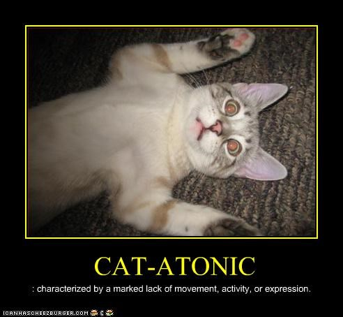 catatonic shocked - 3363299584