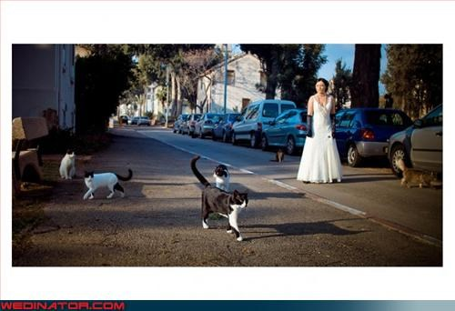 aspca Cats Crazy Brides crazy cat lady fashion is my passion overpopulation random runaway bride surprise Wedding Themes wtf - 3363619840