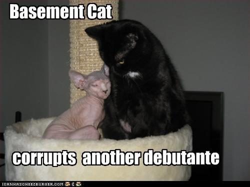 Basement Cat corrupts another debutante