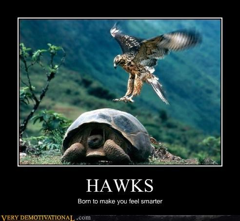 HAWKS Born to make you feel smarter