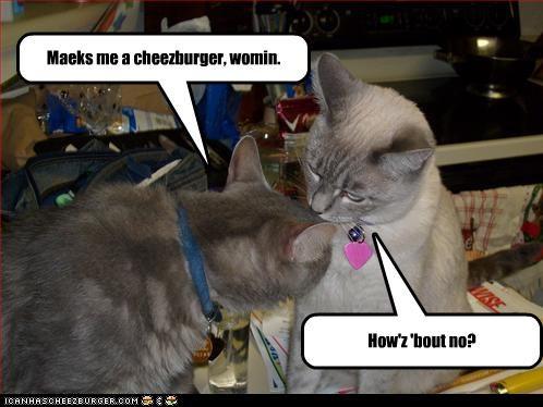 Cheezburger Image 3364942848