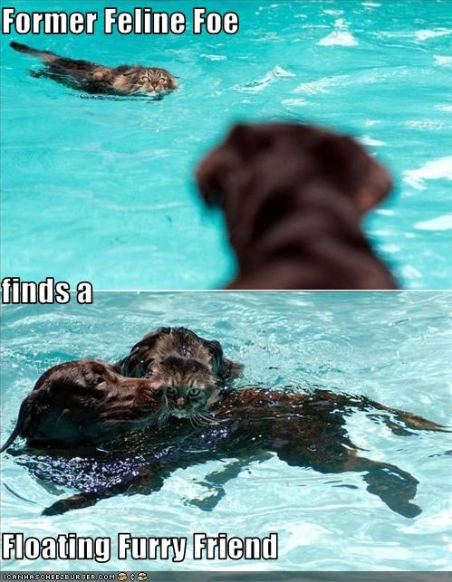 friendship kitteh labrador swimming - 3365202176