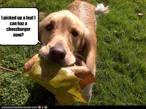 Cheezburger Image 3365229056