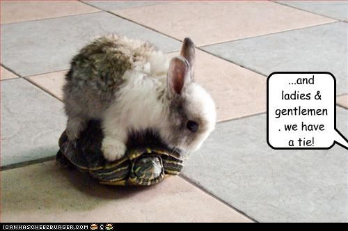cute,lolbuns,lolturtles,racing,tie