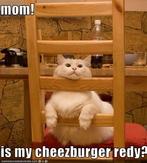 Cheezburger Image 3367012096