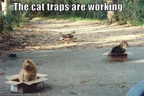 a list of funny cat traps