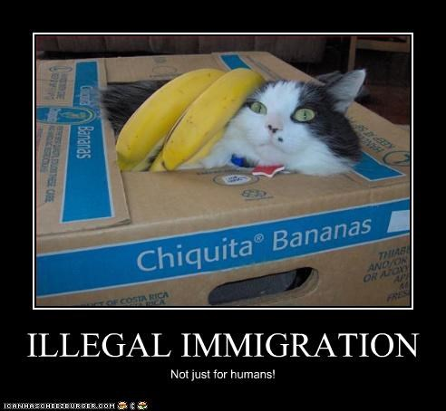 ILLEGAL IMMIGRATION Not just for humans!