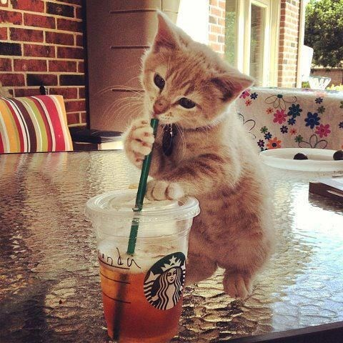 cute pics of kittens drinking from straws