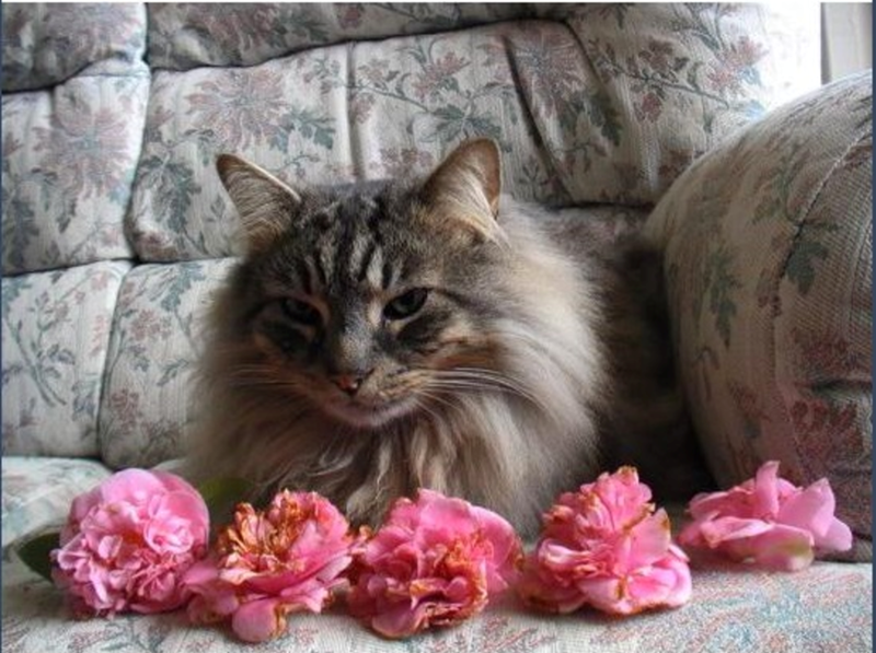 an adorable list of a cat bringing his owner a pink flower every day