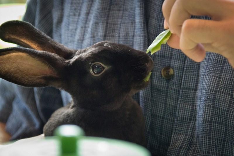 weird animal cafes in Japan