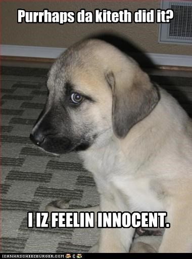 black mouth cur blame innocent kitteh puppy - 3371330560