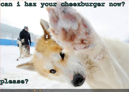 Cheezburger Image 3371429632