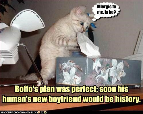 allergic boyfriend kitten plotting tissues - 3372265984