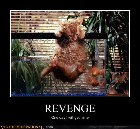 cat,wet,revenge,fish